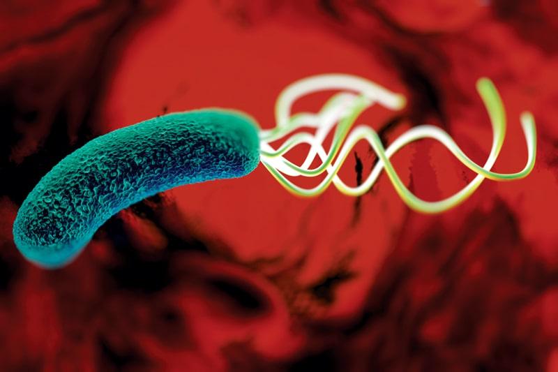عفونت اچ پیلوری چیست ؟ | سینامگ